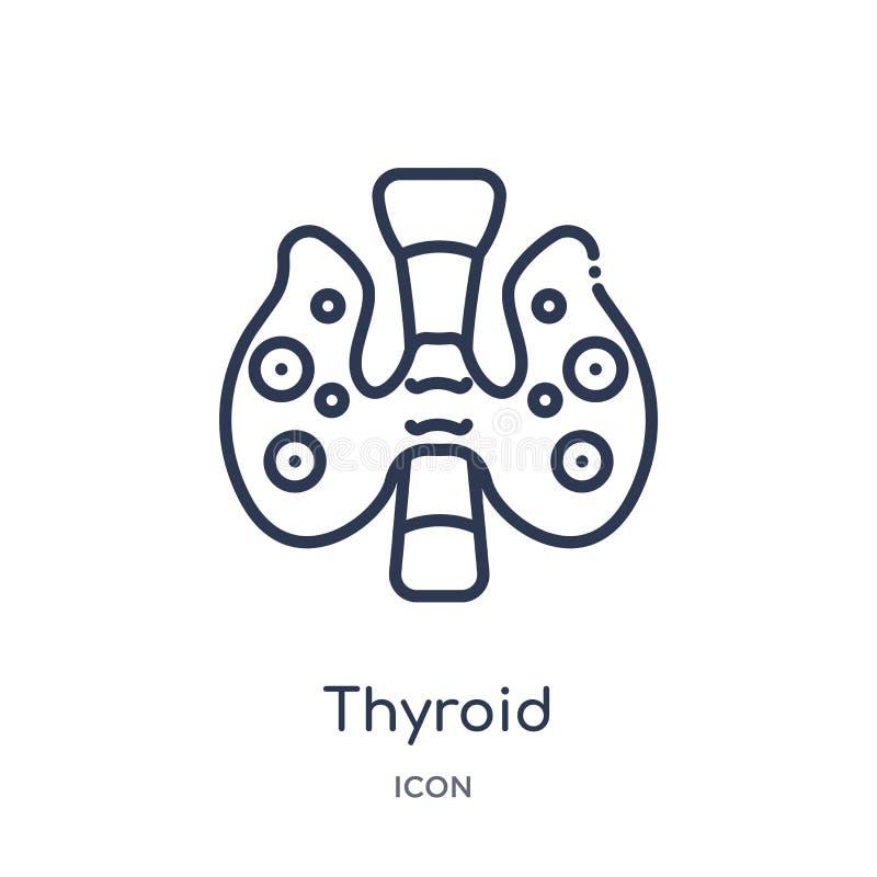 Линейный значок тиреоида от человеческого собрания плана частей тела Тонкая линия значок тиреоида изолированный на белой предпосы иллюстрация вектора