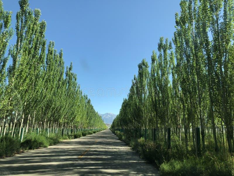 Линия проселочной дороги с деревом тополя стоковое фото rf