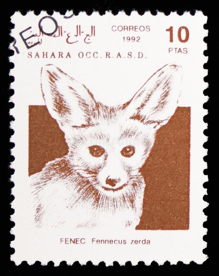 Лиса Fennec (zerda), Сахара Occ Fennecus serie, около 1992 стоковые фотографии rf