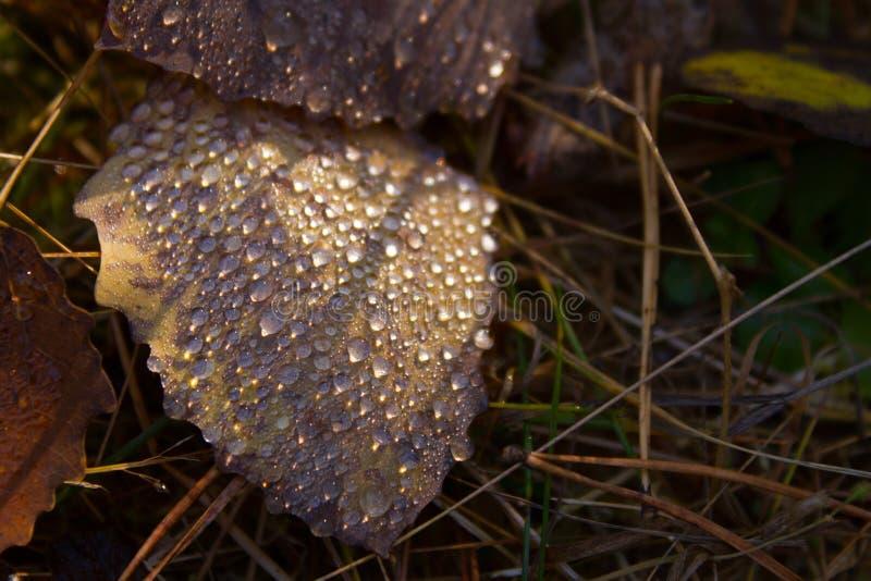 Лист и падения осени стоковое изображение