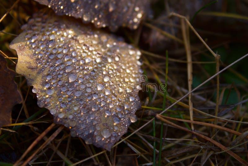 Лист и падения осени стоковое фото