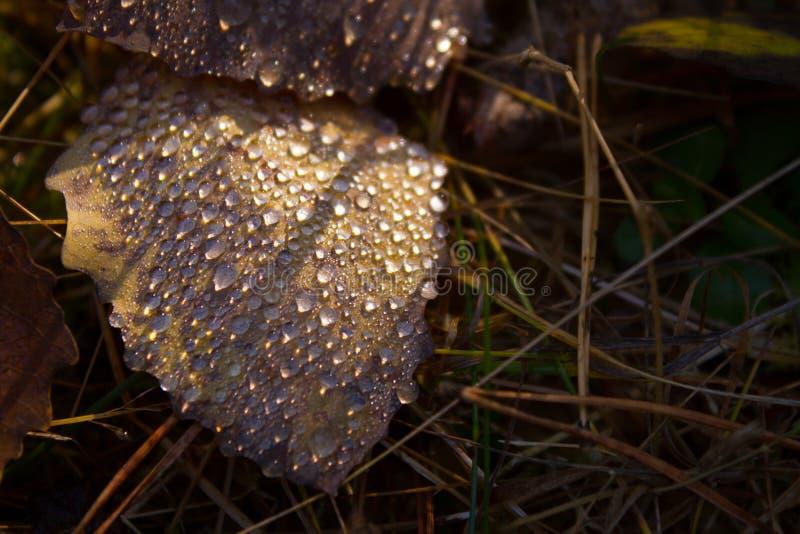 Лист и падения осени стоковые изображения rf