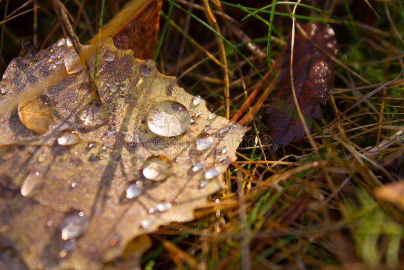 Лист и падения осени стоковая фотография