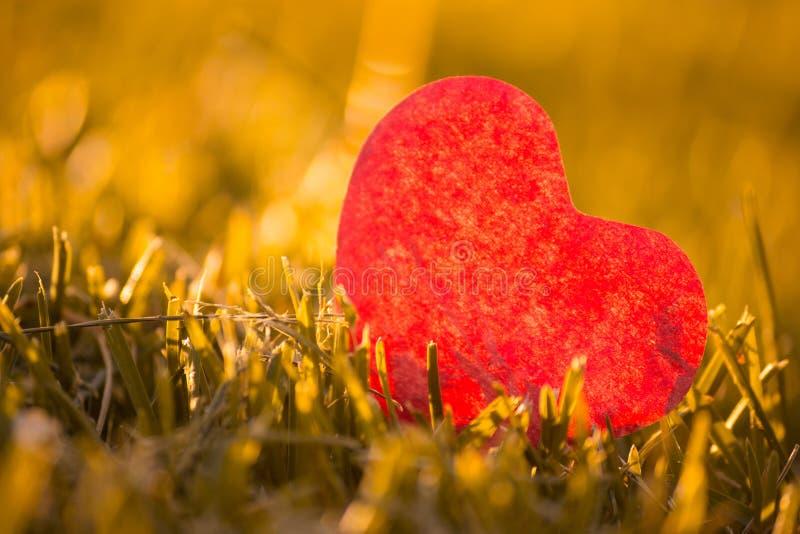 Лист осени с отрезанным сердцем стоковые фотографии rf