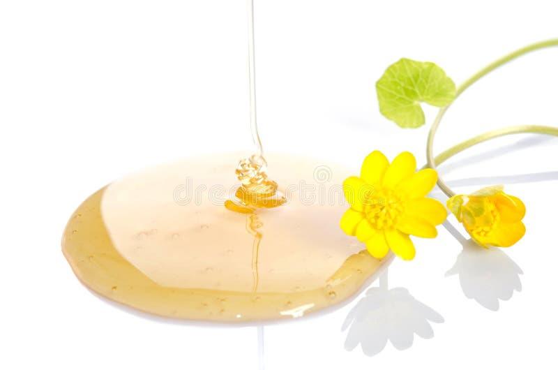 Лить мед с желтыми цветками на белой предпосылке стоковые фото