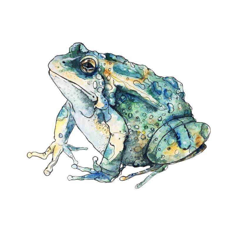 Лягушка акварели эскиза иллюстрация вектора