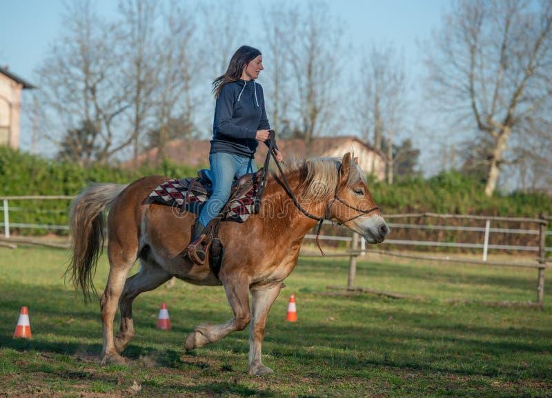 Лошади бегут свободно стоковые фотографии rf