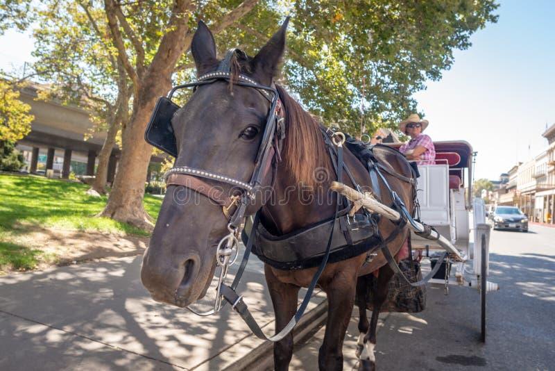 Лошадь и экипаж в Сакраменто, Калифорния стоковое изображение rf