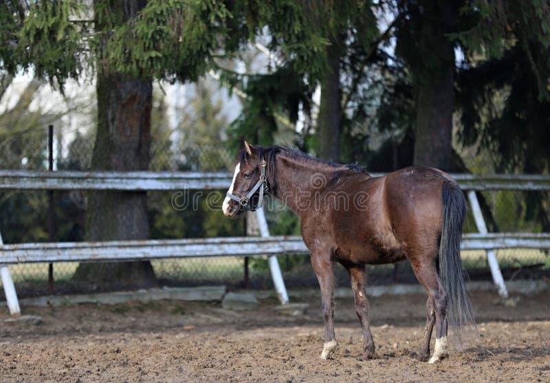 Лошадь, красивый портрет польской лошади стоковая фотография