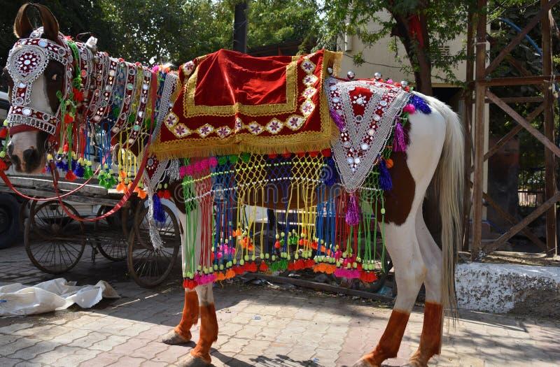 Лошадь обитая для boy& x27; свадьба s, Bikaner, Раджастхан, Индия стоковая фотография rf