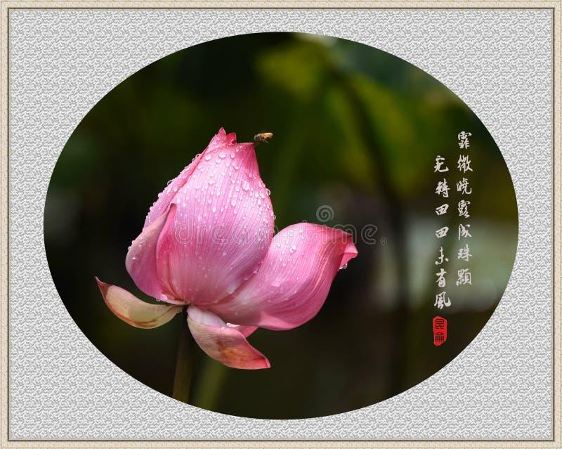лотос и пчела с классической китайской поэзией, стилем китайской росписи традиционного китайского стоковое изображение rf