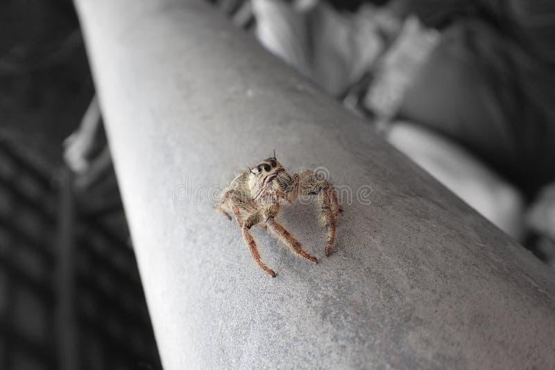 Макрос близкий вверх тропических пауков паукообразные в одичалом arachnophobia стоковые изображения