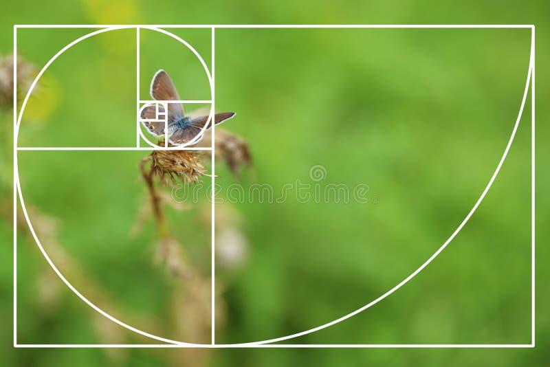 Малая бабочка на сухом заводе в зеленом луге стоковая фотография rf