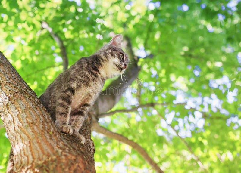 Маленький красивый милый котенок tabby сидит высоко на дереве с яркой сочной листвой в солнечном саде лета стоковое изображение