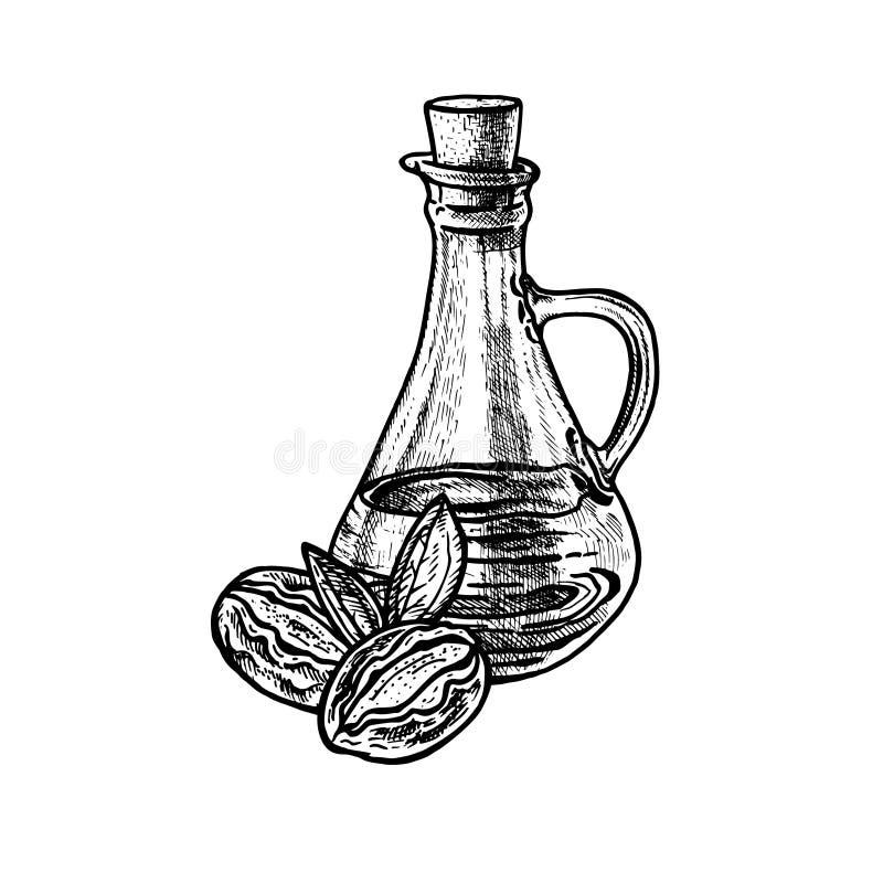 Масло жожобы руки вычерченное Выдержка завода с листьями Винтажный эскиз вектора иллюстрация вектора