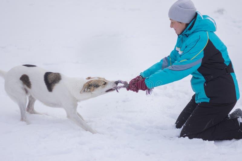 Мастерская игра со смешанной собакой породы пробуя вытянуть вне веревочку от зубов собаки стоковые изображения