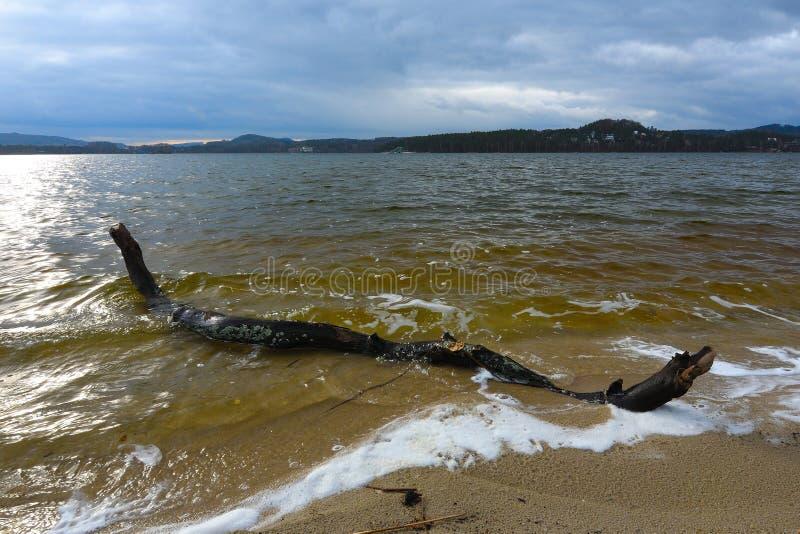 Мертвая древесина в море Выхват на песке стоковое фото rf