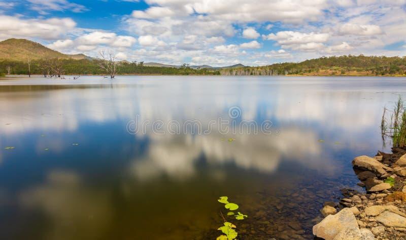 Мертвые деревья в озере стоковые изображения