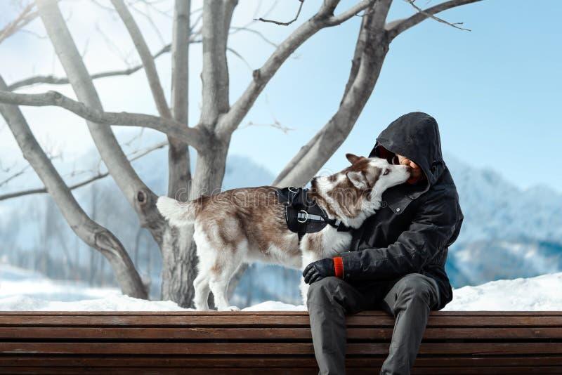 Милая сибирская сиплая собака лижа человека сильно в горах на солнечный зимний день стоковые изображения rf