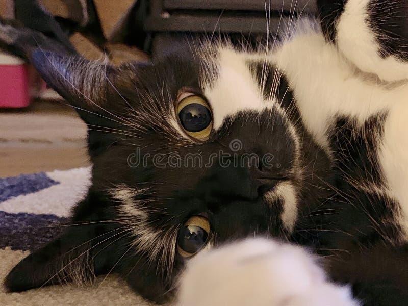 Милые глаза котов стоковые изображения