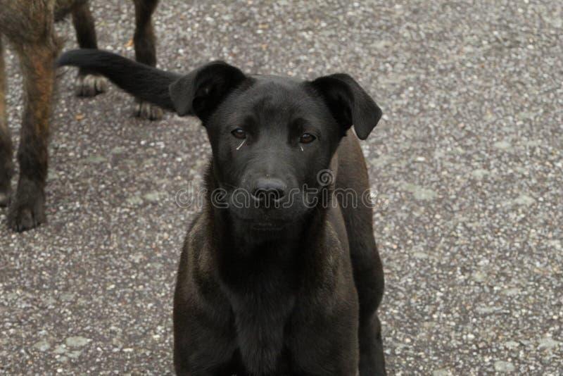 Милые черные и серые собаки стоковое изображение