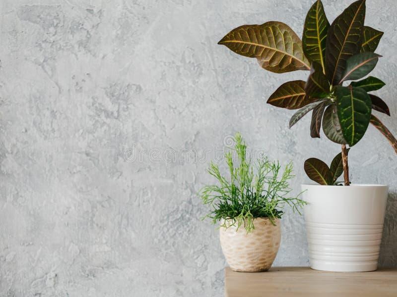 Минимализм комнатного растения домашнего оформления завода современный стоковое изображение