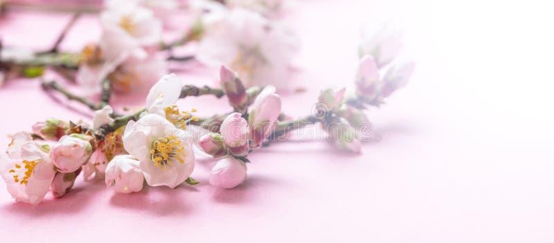 Миндалина цветет букет на розовой предпосылке, знамени, взгляде крупного плана стоковые изображения