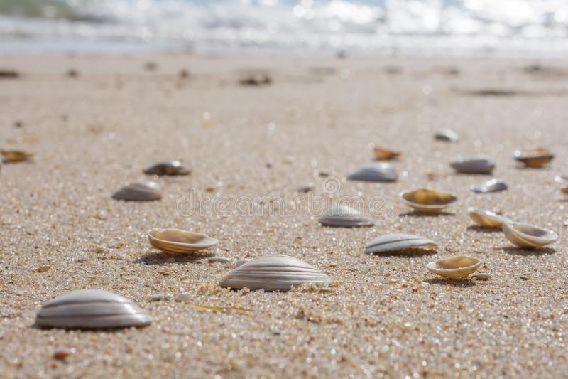 Много раковин на точном песчаном пляже стоковые изображения rf