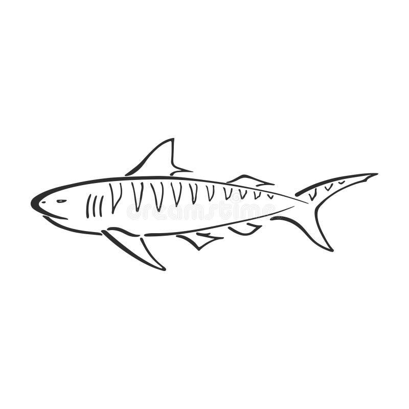 Мультфильм логотипа вектора руки чернил конспекта характера тигровой акулы вычерченный Упрощенная ретро иллюстрация Синь океана н иллюстрация вектора