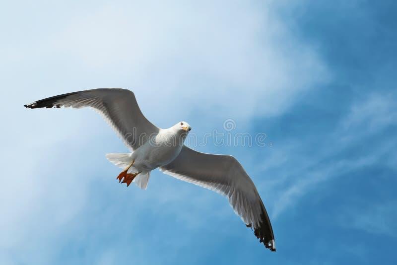 Муха птицы в облаках стоковое изображение