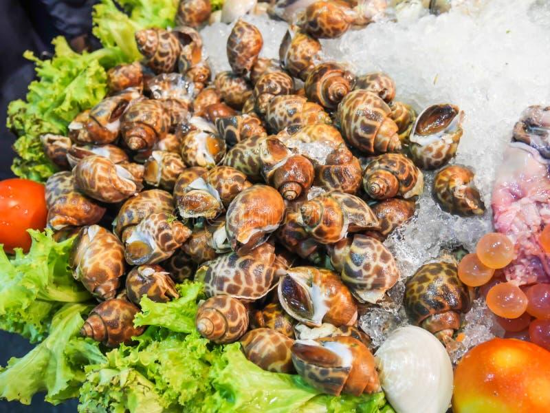 Моллюск как clams очень вкусен, морепродукты на рынке льда вечером в Hua Hin, Таиланде стоковая фотография