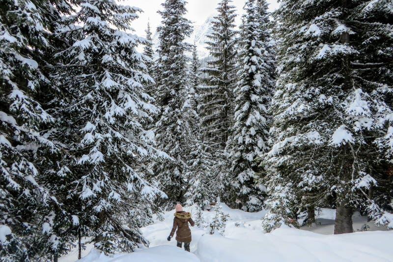 Молодая женщина snowshoeing через леса озера остров в Fernie, Британской Колумбии, Канаде Величественная предпосылка зимы стоковое изображение