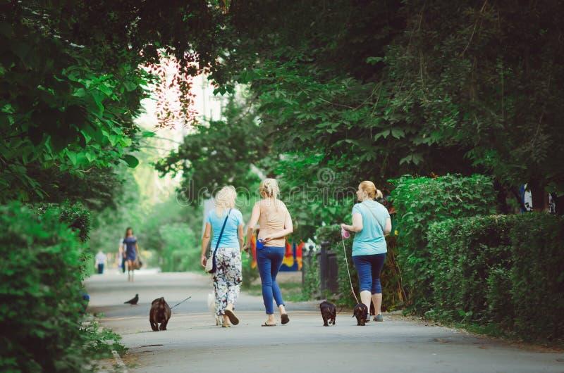 Молодые женщины идут с их собаками в парке города рано утром стоковые изображения rf