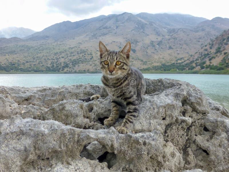 Молодой кот сидя на камне около озера Kournas, пресноводного озера в Крите, Греции стоковое изображение