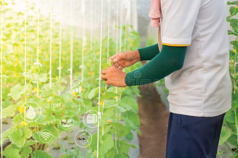Молодой фермер в графике сельского хозяйства управления зеленого дома и argo стоковые фото