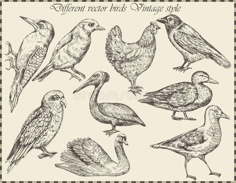 Набор вектора: птицы - разнообразие винтажной птицы иллюстрация штока