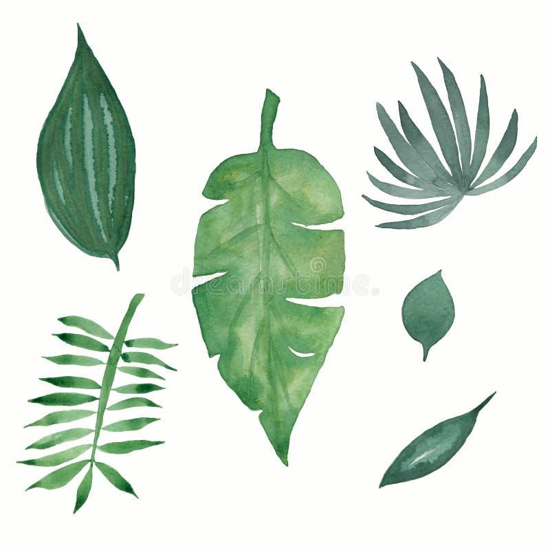 Набор листьев акварели тропический зеленый изолированный на белой предпосылке иллюстрация штока