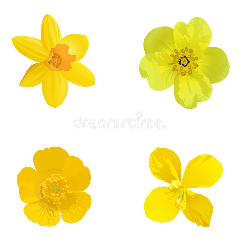 Yellow flowers isolated on a white background. Set. stock illustration