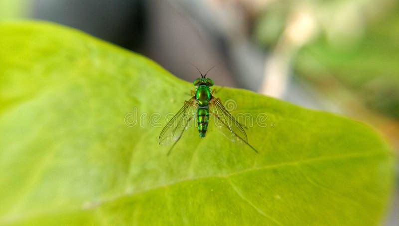 Насекомое на зеленых листьях стоковые фотографии rf