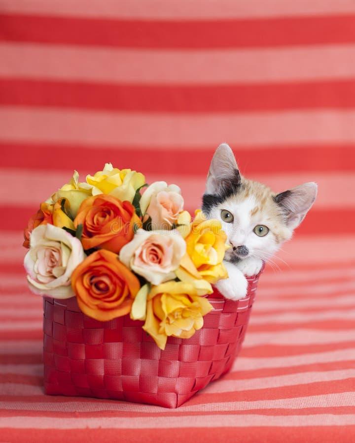Нашивки и цветки котенка оранжевые стоковое фото rf