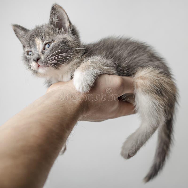 Небольшие, милые лож котенка на сильной мужской руке и сонно смотрят вперед, на белой предпосылке стоковое изображение rf