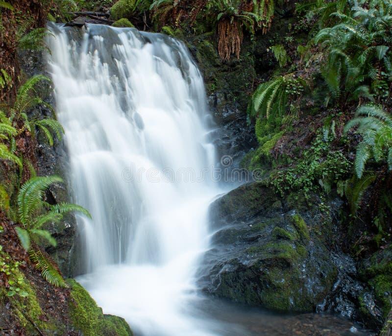 Небольшой водопад в прибрежном ряде южного Орегона стоковые фото