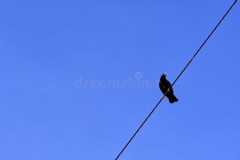 Небо ворона, голубых и ясных стоковая фотография rf