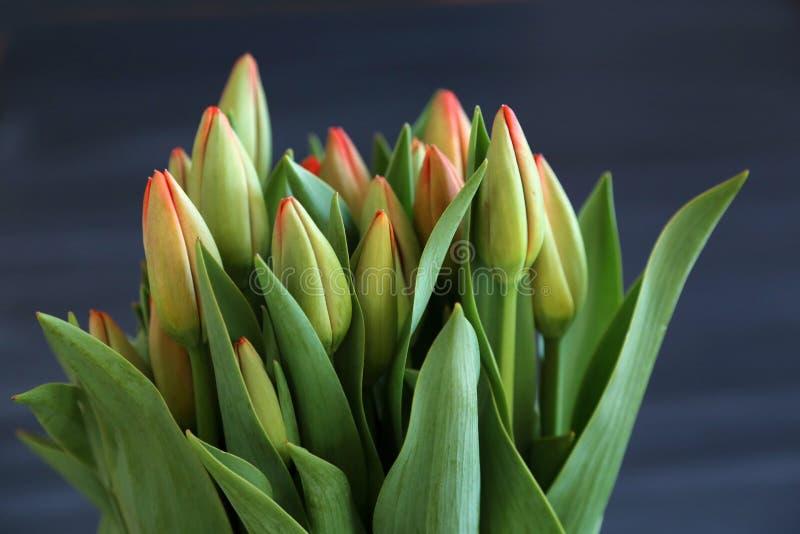 Немногие красные цветки тюльпанов на темной поверхности chalcboard Букет на предпосылке конспекта нерезкости с космосом экземпляр стоковое изображение rf