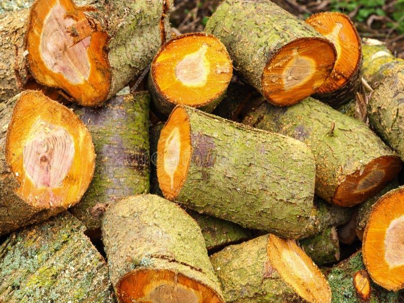 Недавно спиленные куски дерева стоковое изображение rf