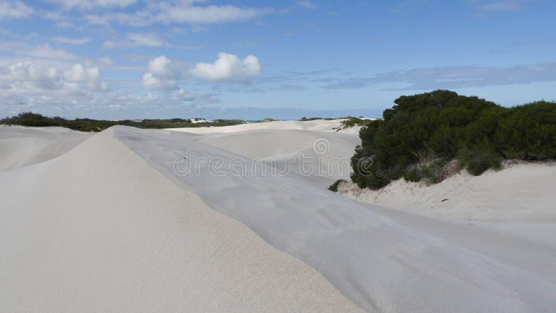 Нетронутая белая песчанная дюна и куст, голубое небо и облака стоковое изображение