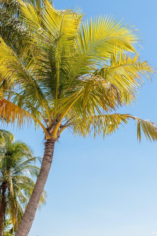 Пальма на пляже Таиланда стоковое фото rf