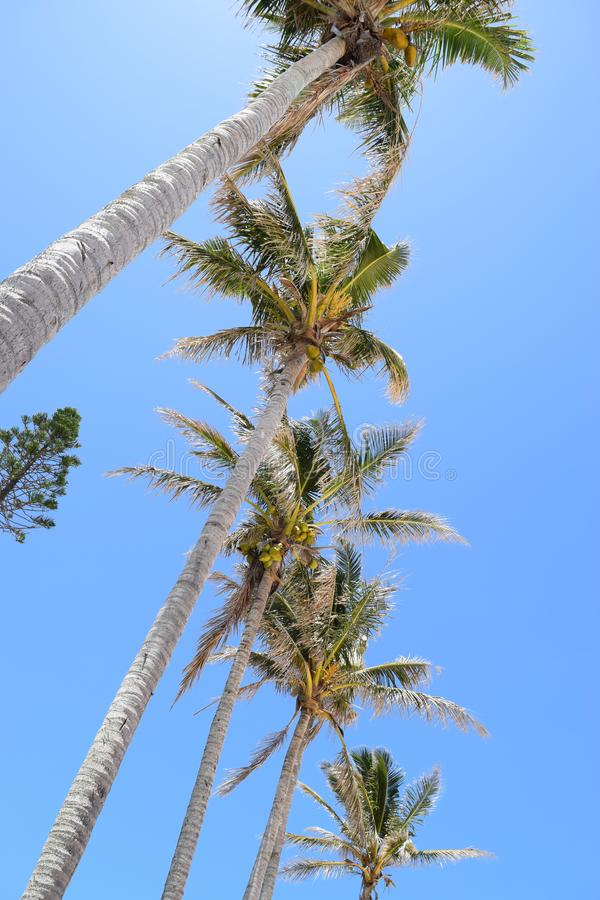 пальмы тропические стоковое фото rf