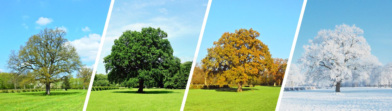 Панорама парка - 4 сезона стоковые изображения