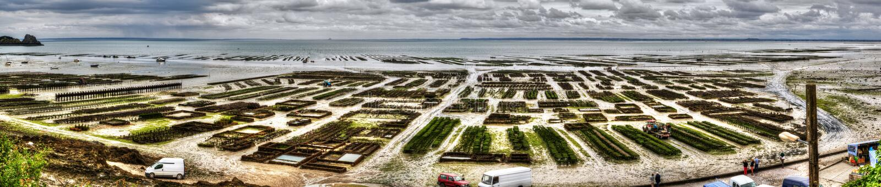 Панорамный вид устриц обрабатывает землю в Cancal, Франции стоковое фото rf